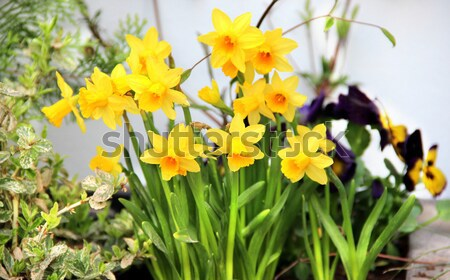 Modern terrace with a lot of flowers  Stock photo © tannjuska