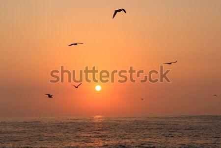 Ocean sunset Stock photo © tannjuska