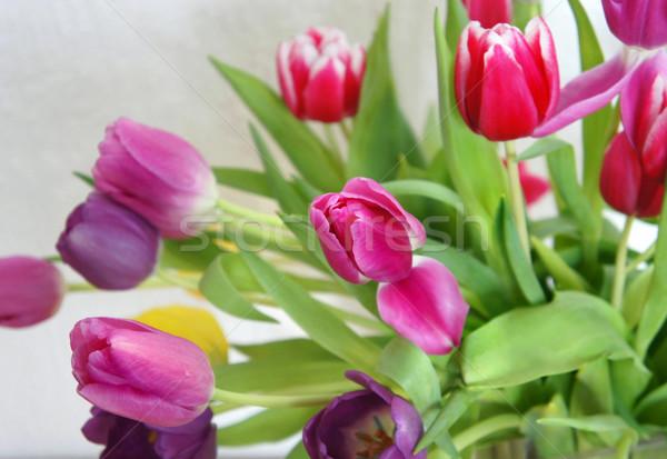 Bella multicolore Holland tulipani fiori Foto d'archivio © tannjuska