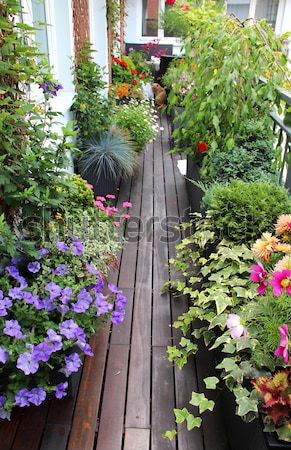 Beautiful modern terrace with mix of summer flowers Stock photo © tannjuska