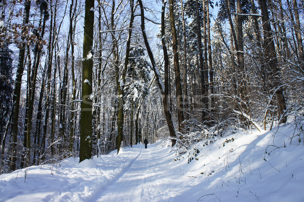 Belle hiver neige forêt arbre route Photo stock © tannjuska