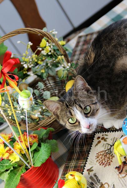 Easter rabbit and funny cat Stock photo © tannjuska