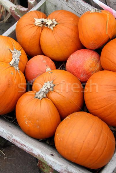 Grand halloween automne jardin Photo stock © tannjuska