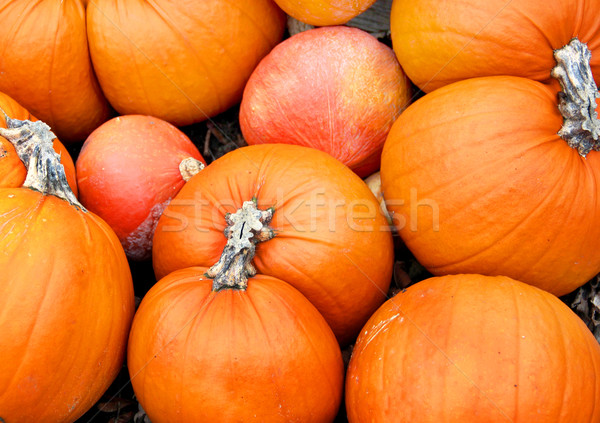 Big mix of Halloween pumpkins, fall Stock photo © tannjuska