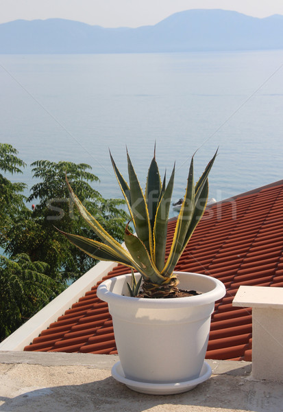 Typical Croatian house and pot wit aloe Stock photo © tannjuska