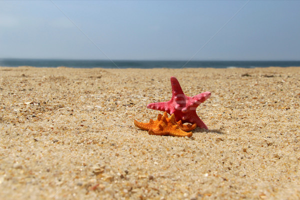 Sea stars, starfishes Stock photo © tannjuska