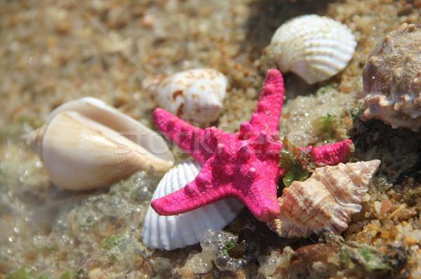 Conchas lejos estrellas de mar playa peces mar Foto stock © tannjuska