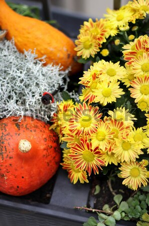 Mix of  beautiful fall terrace flowers Stock photo © tannjuska
