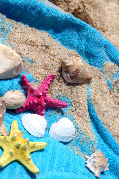 Sea composition of starfishes and shells  Stock photo © tannjuska