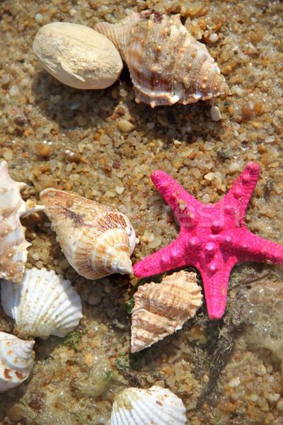 Starfishes on the beach Stock photo © tannjuska