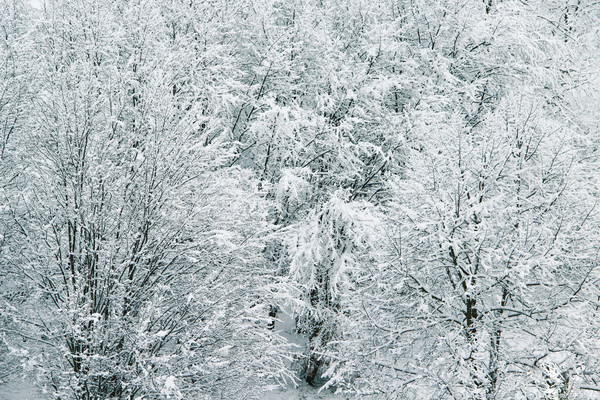 Beautiful winter with a lot of snow in the forest Stock photo © tannjuska