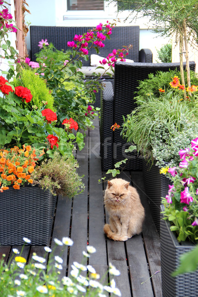 Modernes immobilier fleur herbe chat design Photo stock © tannjuska