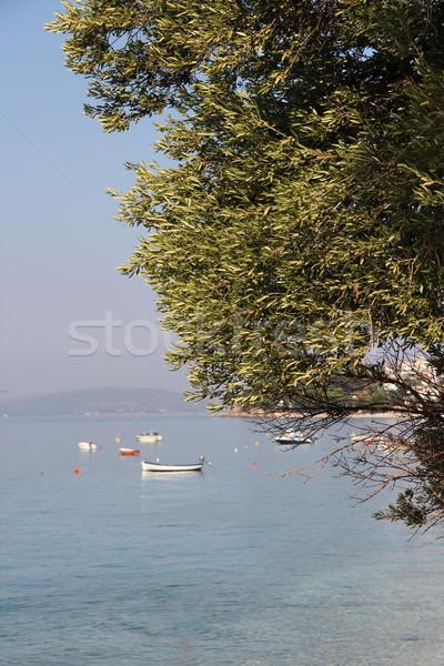 Olivo mediterráneo mar árbol sol hoja Foto stock © tannjuska
