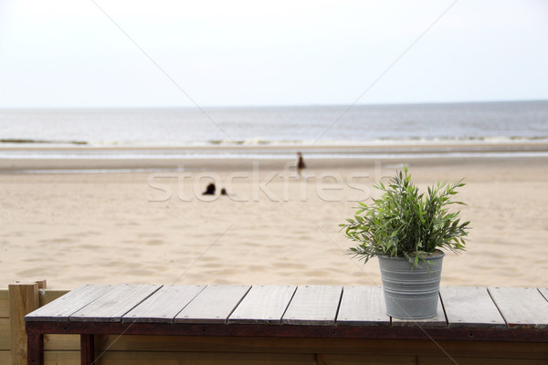 North sea and flower pot Stock photo © tannjuska