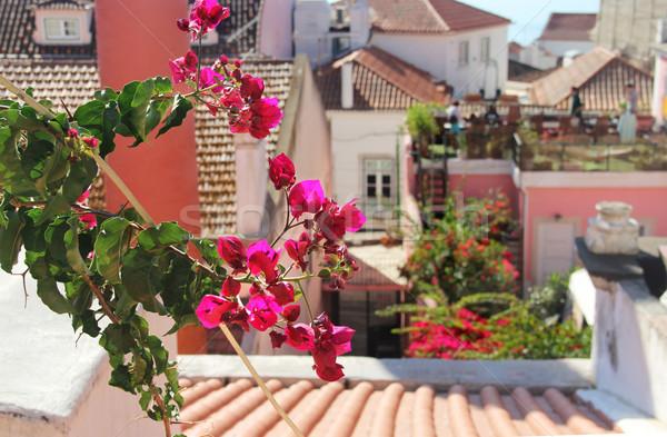 Gyönyörű mediterrán terasz virágok Lisszabon Portugália Stock fotó © tannjuska