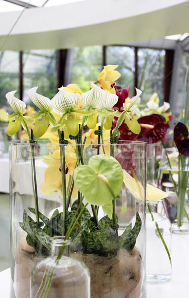 Orchidées autre fleurs grand incroyable Photo stock © tannjuska