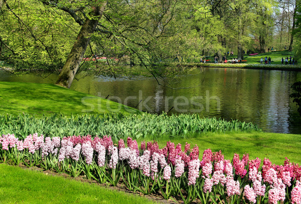 Mix of Holland tulips and hyacinths  Stock photo © tannjuska