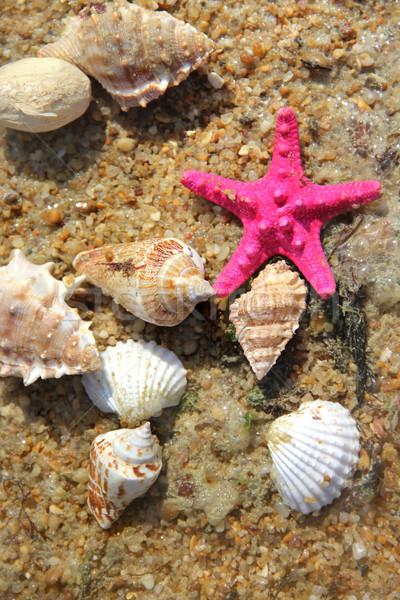 Photo stock: Plage · belle · poissons · océan