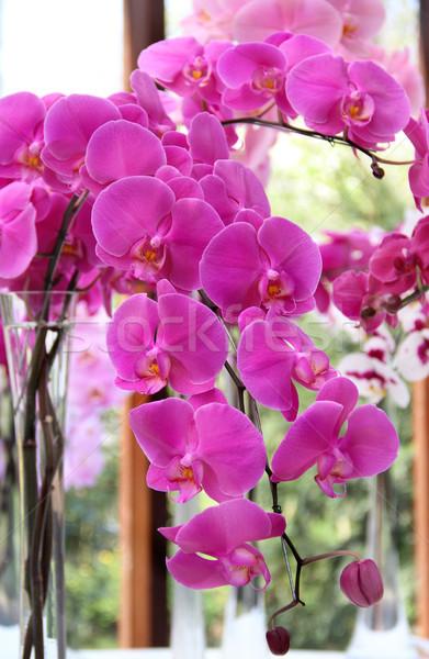 красивой розовый фиолетовый Орхидеи ваза цветок Сток-фото © tannjuska