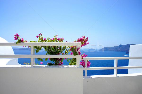 サントリーニ テラス 花 ギリシャ 結婚式 自然 ストックフォト © tannjuska