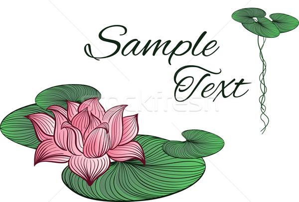 Pink Lotus flower Stock photo © tanya_ivanchuk