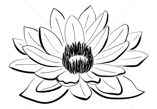 Vector zwart wit schets stijl Stockfoto © tanya_ivanchuk