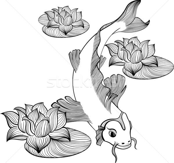Koi vis drie bloemen lotus lijn Stockfoto © tanya_ivanchuk