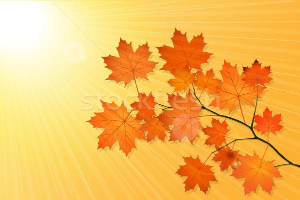 Najaar landschap esdoorn boom oranje bladeren Stockfoto © tanya_ivanchuk