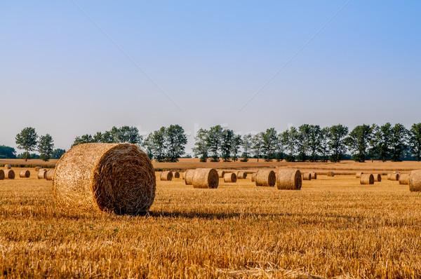 соломы полях Blue Sky природы пейзаж фон Сток-фото © tarczas