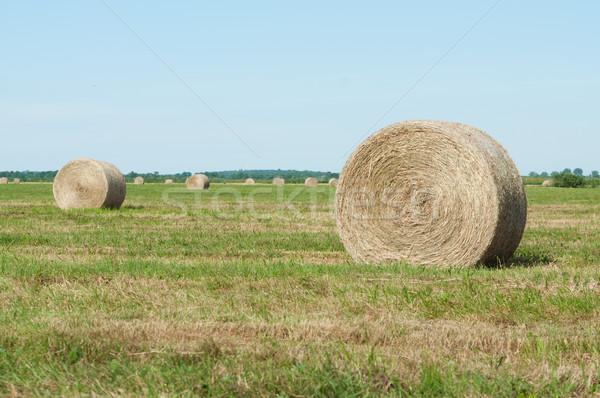 Straw rolls on farmer field in the summer Stock photo © tarczas