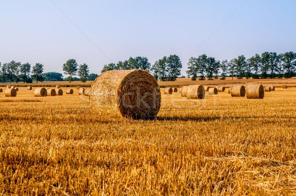 Słomy pola Błękitne niebo charakter krajobraz tle Zdjęcia stock © tarczas