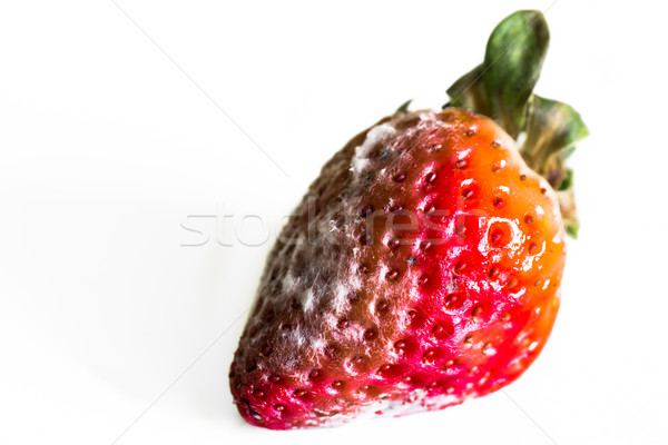 Strawberry With Mold Fungus Stock photo © tarczas