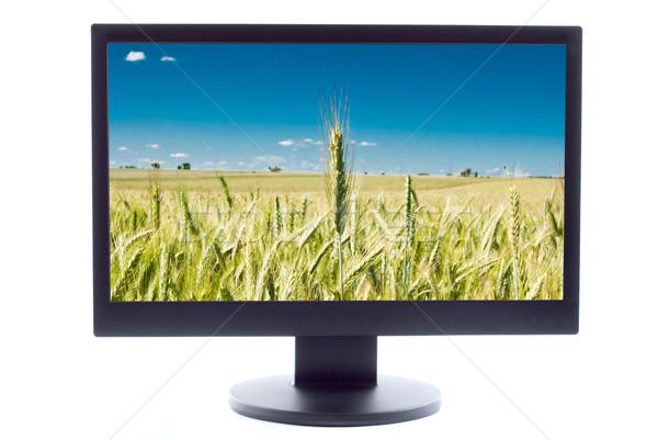 ストックフォト: 緑 · 小麦 · ファーム · フィールド · テレビ · 空