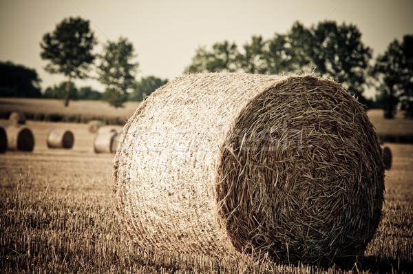 Kuru ot yığını çiftçi alan buğday güneş doğa Stok fotoğraf © tarczas