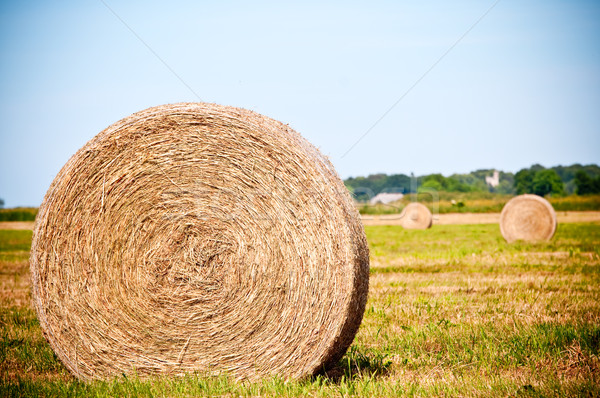 Straw rolls on summer farmer field Stock photo © tarczas