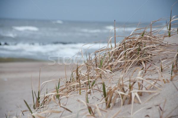 sandy dune on the seashore Stock photo © tarczas