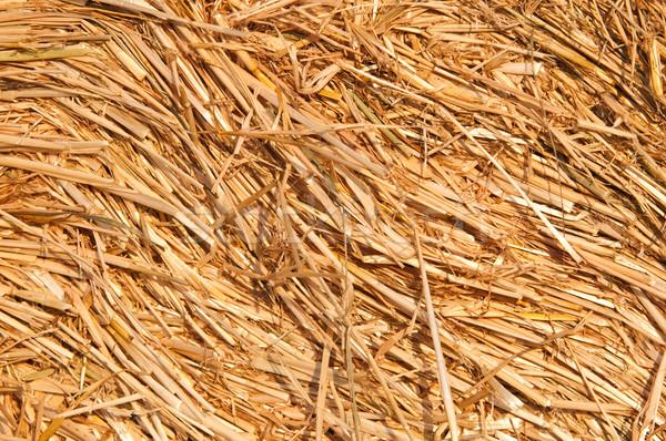 Straw roll Stock photo © tarczas