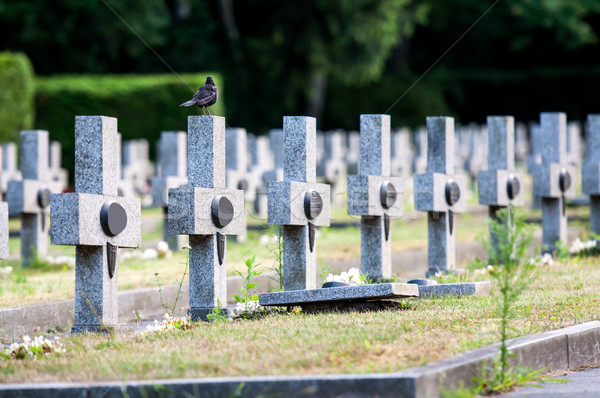 granit crosses on the graves of warriors Second World War Stock photo © tarczas