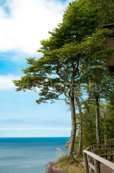 trees at high hill on seashore Stock photo © tarczas