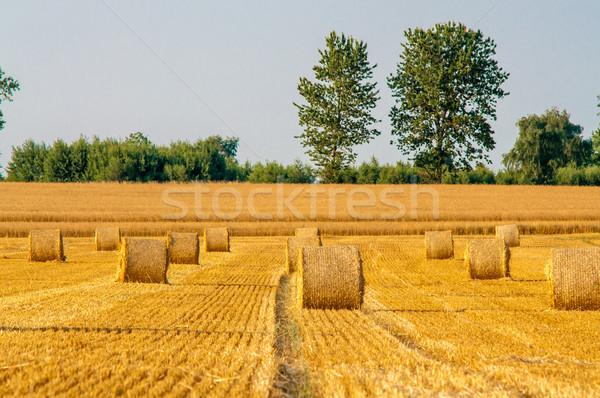 Szalmaszál mezők kék ég természet tájkép háttér Stock fotó © tarczas