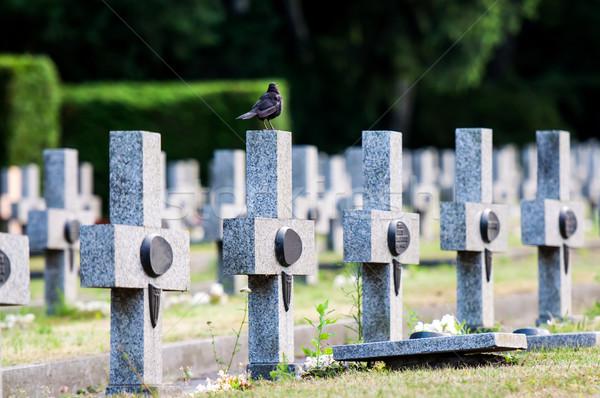 Krzyże drugi świat wojny trawy Zdjęcia stock © tarczas