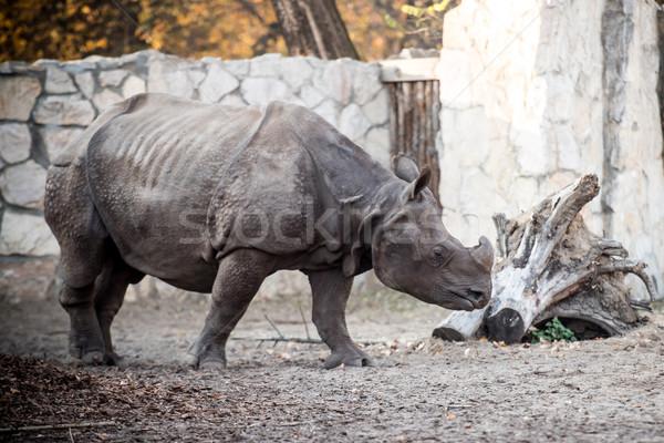 Rinoceronte zoo natura verde toro rhino Foto d'archivio © tarczas
