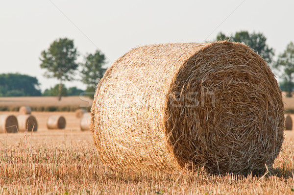 rolling haystack on farmer field Stock photo © tarczas