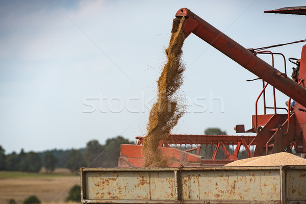 combine harvester unloading grain into the trucks trailer on sunny summer day Stock photo © tarczas