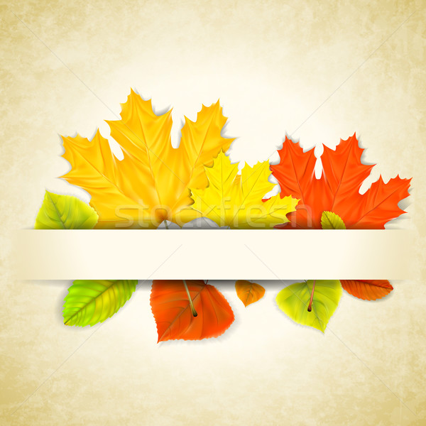 Autumn leaves on scratched paper background Stock photo © TarikVision