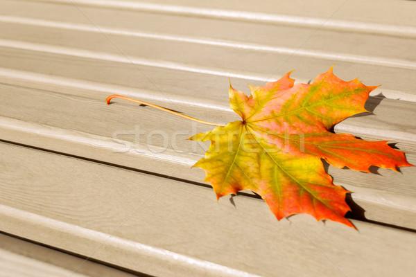 Vallen blad houten kleurrijk esdoornblad exemplaar ruimte Stockfoto © TasiPas