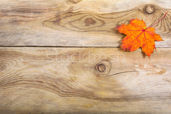 Fall greeting background with orange fall maple leaf, copy space Stock photo © TasiPas