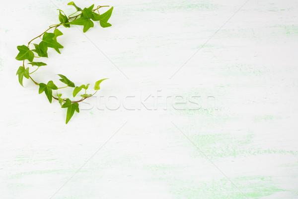 Lierre branche vert clair fleurs carte postale accueil Photo stock © TasiPas