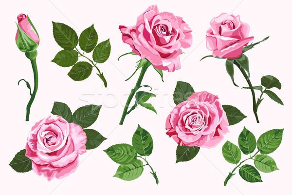 Roze vector rozen communie ingesteld geïsoleerd Stockfoto © TasiPas