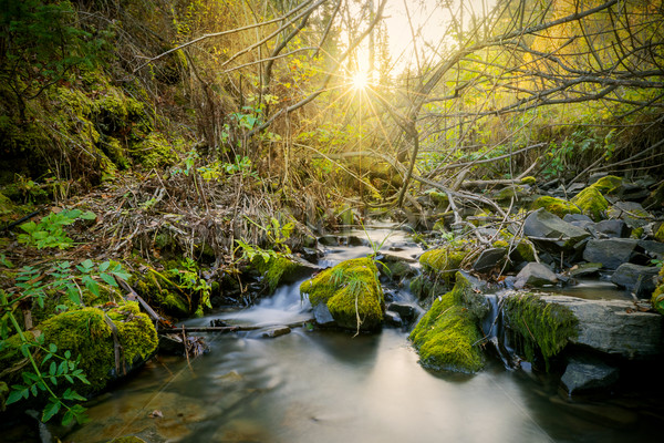 Beautiful landscape with stream and sunbeams through trees  Stock photo © TasiPas